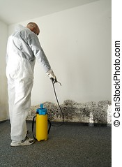 Mold - specialist during combat mold in an apartment