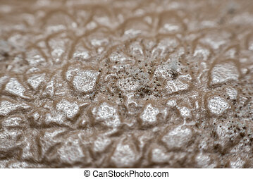 Mold Spores grown on the skin of the leather