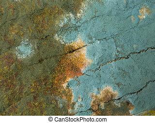 mold closeup