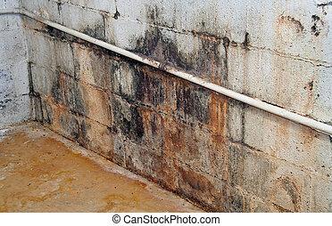 molde, e, mofo, coberto, porão, parede