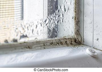 molde, suciedad, ventana