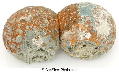 Two moldy bread rolls over white.