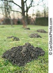 mole hole in the garden