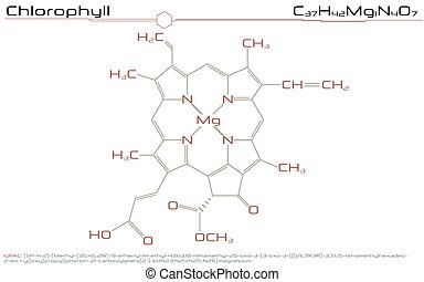 Molecule of Chlorophyll - Large and detailed infographic of...