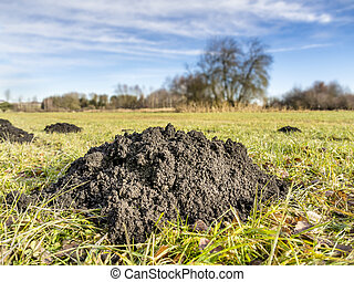 Molehill on a green meadow in a landscape with trees