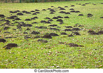On a meadow are some big mole hills.