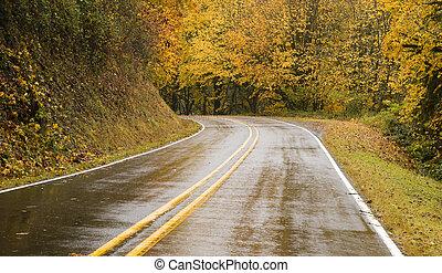 molhados, blacktop, estrada duas pistas, curvas, através, outono, árvores, outono