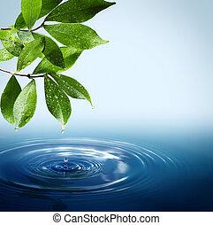 molhados, folhas, queda, wat, gotas