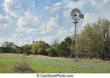 molino de viento, país, tejas, colina, bluebonnets