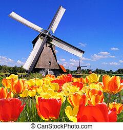 molino de viento, tulipanes, holandés