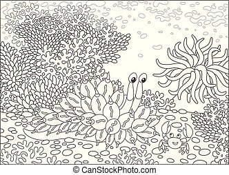 Funny tropical mollusk and a friendly smiling crab on a coral reef, black and white vector illustrations in a cartoon style for a coloring book