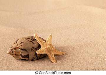 Mollusk and starfish on beach sand