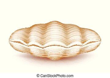 Mollusk closed seashell 3d realistic vector icon - Sea...