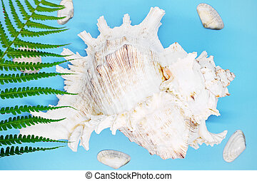 mollusk shell close-up on a blue background,