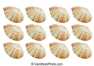shellfish - mollusk, shellfish