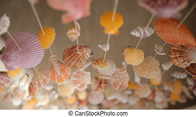 Mollusk Shells - curtains of mollusk shells, shooting from...