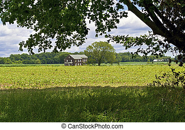 Molly Pitcher View - A shade tree framed view of the...