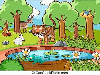 molti, animali, scena, foresta