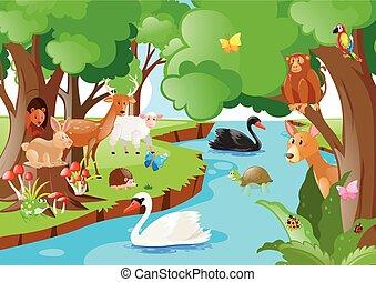 molti, animali, scena, tipi, foresta