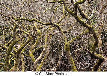 molti, nodoso, rami, albero