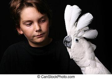 moluccan, 白鸚, 由于, a, 年輕 成人