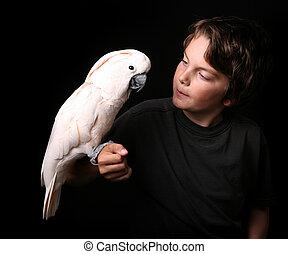 moluccan, 白鹦, 带, a, 年轻成年人