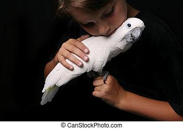 moluccan, kakadu, noha, egy, young felnőtt