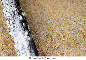 moluscos, praia, vara, arenoso
