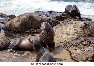 Mom and pup California sea lion Zalophus californianus on...