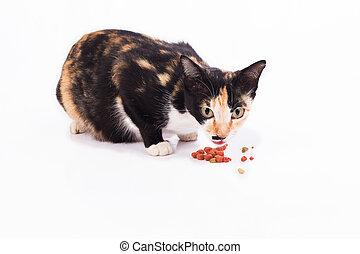 mom cat eating food