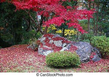 Momiji maple leaves - Autumn leaves in Japan - red momiji ...