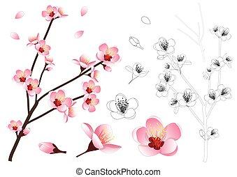 Momo Peach Flower Outline
