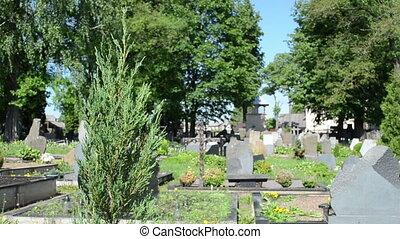 momument cemetery tree