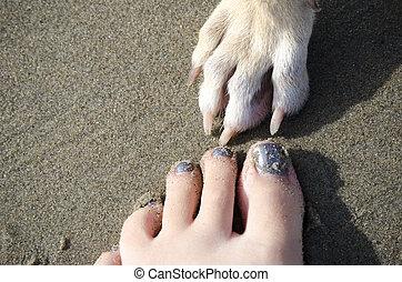 mon, toujours, plage, amis, chien