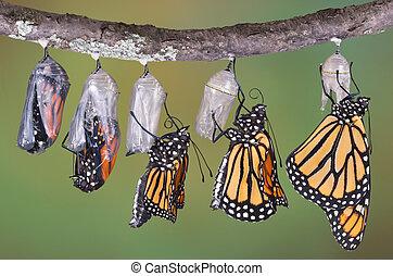 monarcas, el emerger