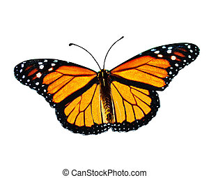 Beautiful Monarch butterfly isolated on white background, clipping path included