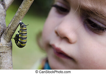 Monarch butterfly caterpillar - CABLE BEY, NZ - JUNE 18:Girl...