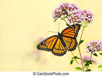 Colorful close up image of a monarch butterfly on some oregano flowers with a muted neutral background, with copy space.