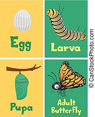 Monarch Butterfly Cycle Flash Cards Illustration
