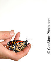 Monarch butterfly in person hands
