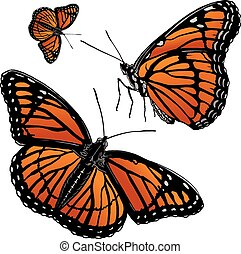 Monarch Butterfly is an illustration of monarch butterfly in three versions. Includes a side and full on version.
