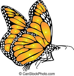 Isolated beauty monarch butterfly as a vector illustration