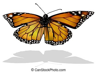 Monarch Butterfly - Isolated Colored Illustration with ...