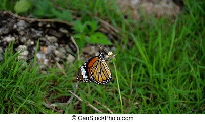 Monarch butterfly on flower