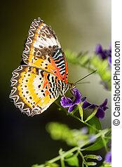 Monarch butterfly on small purple flowers