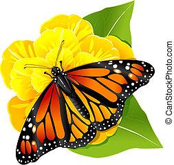 Monarch butterflies on the yellow flower