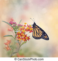 Monarch Butterfly on Tropical Milkweed plant.
