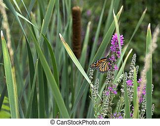 monarch butterfly on wildflower