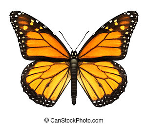 Monarch Butterfly with open wings in a top view as a flying...