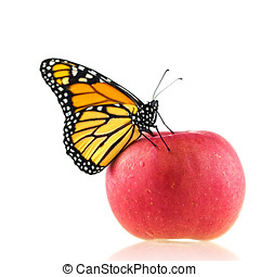 Monarch Butterfly Sitting On An Apple